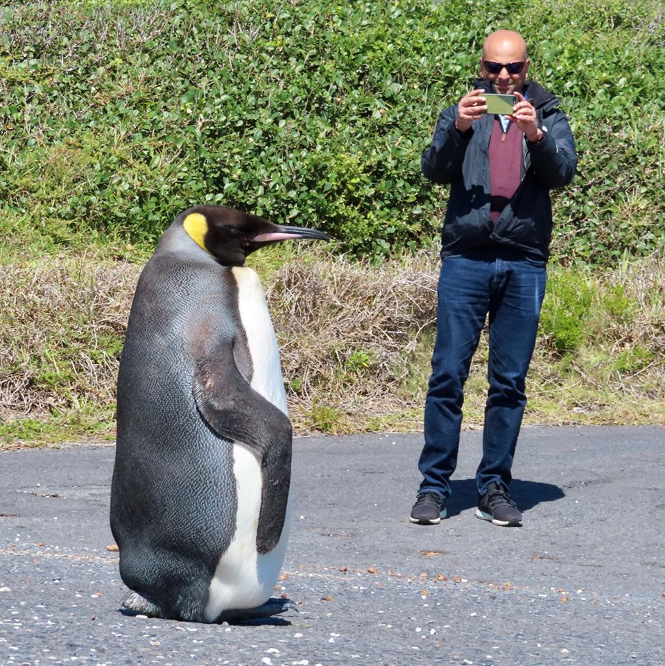 Joby meets the King Penquin