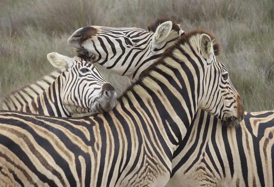 Buffelsfontein Private Game Reserve